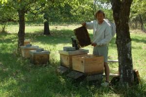 Bienen-in-der-Streuobstwiese-2014-031
