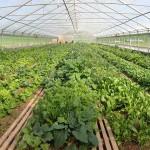 Auch für die Landwirtschaft war es ein bewegtes Jahr: unser neues drittes Gewächshaus ermöglicht eine immer umfassendere Selbstversorgung – und die Belieferung regionaler Mitglieder