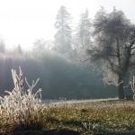 Ein bewegtes Jahr ging mit unserer gästefreien Gemeinschaftszeit im Dezember zu Ende: unser Weg der Stille um den alten Birnbaum ganz im Rauhreif.