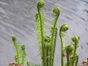 Saeen Wachsen Ernten