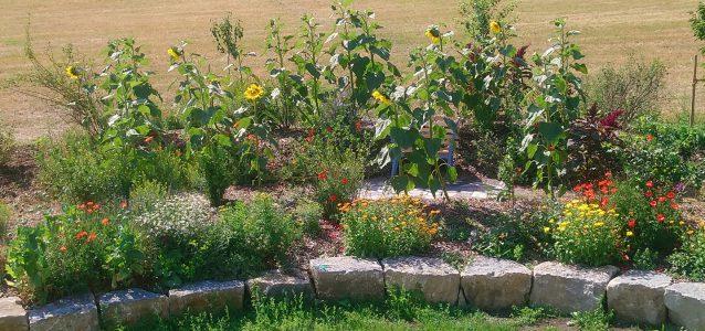 Der Seminarhausgarten wächst und gedeiht